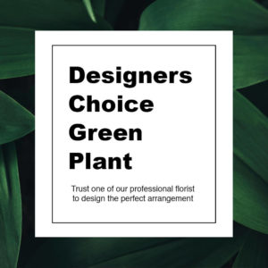 Designer's Choice Green Plant